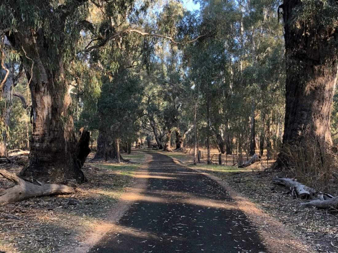 Walking track which walks through river gum trees and reaches the Murray River